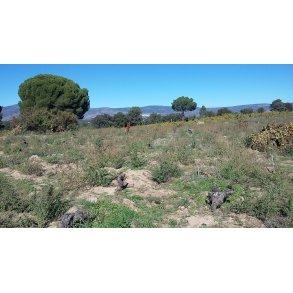 Vino de la Tierra de Castilla Y Leon